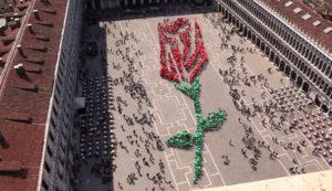 Rosebud Festival