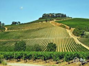 Chianti Grape Harvest Festival