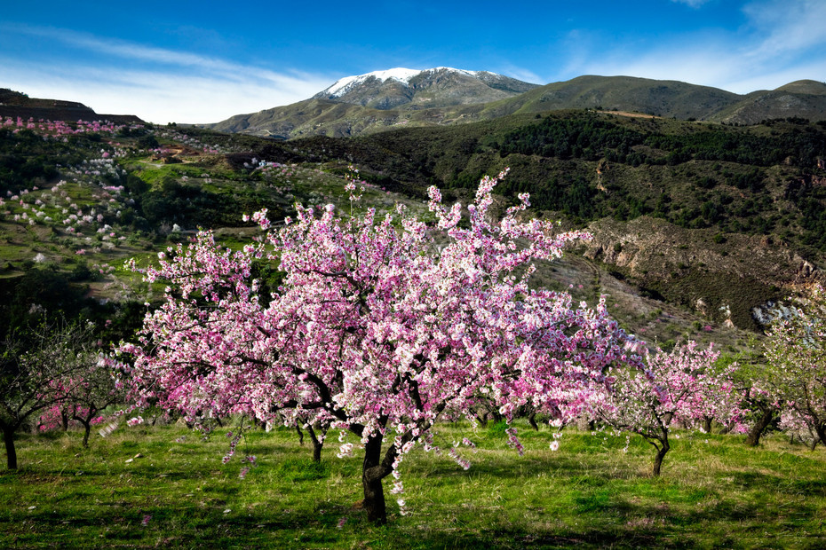 Sicily for Culture, Weather, and Almond Blossoms