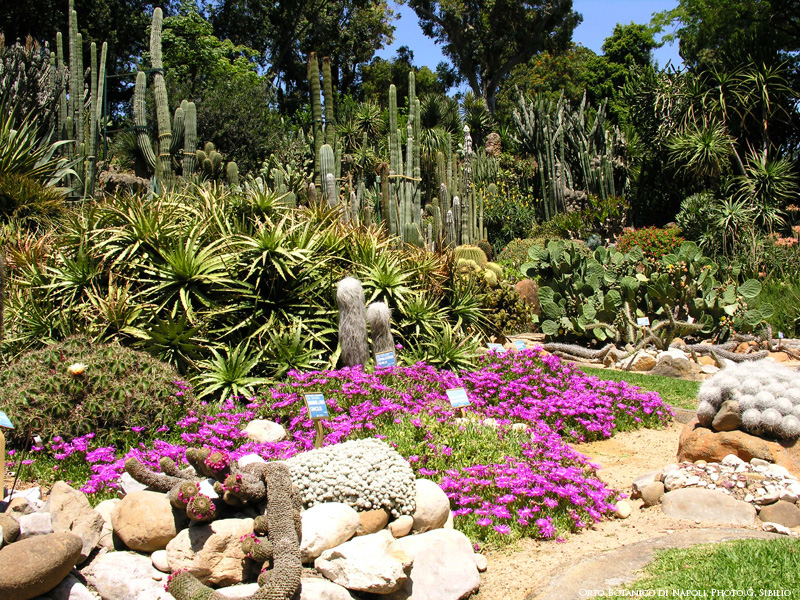 Naples less known attractions: the Orto Botanico
